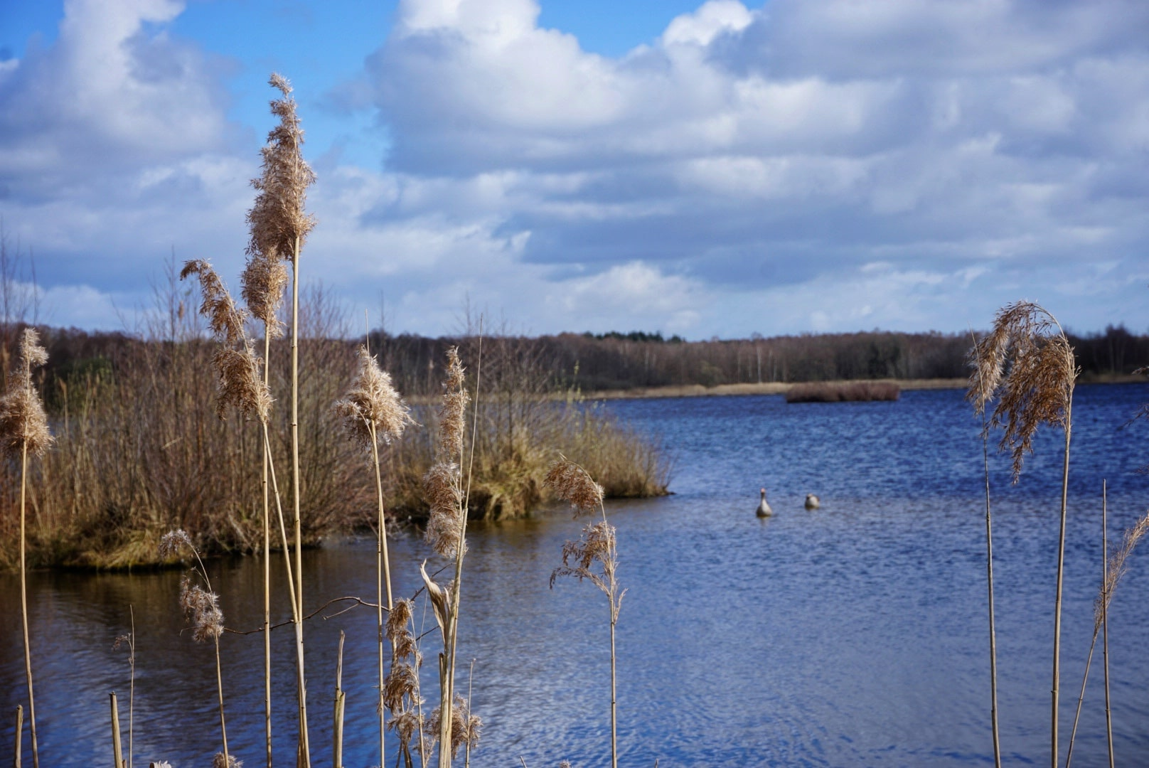 Seen, Flüsse und Moore - Wanderungen bei Hannover